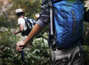 Trekking dans les forêts